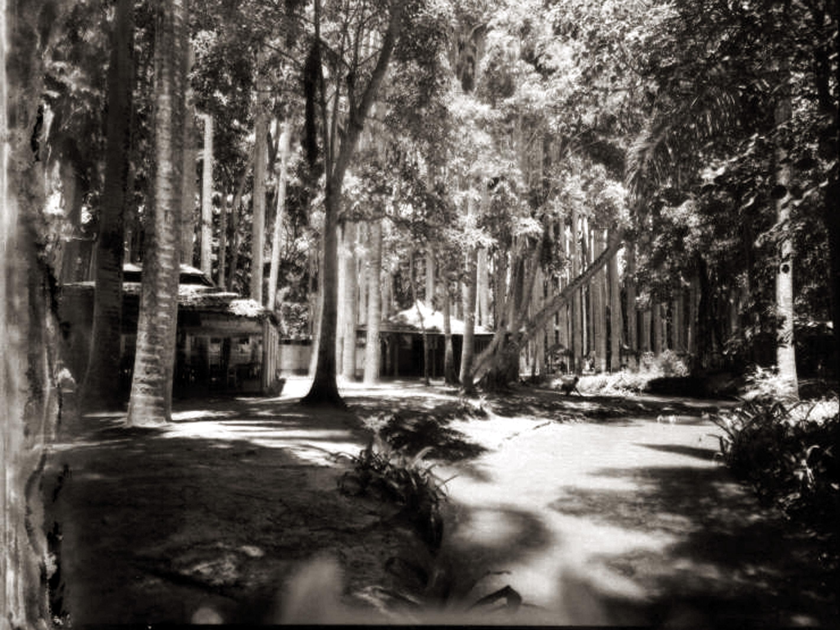 El Bosque Macuto: historia dorada